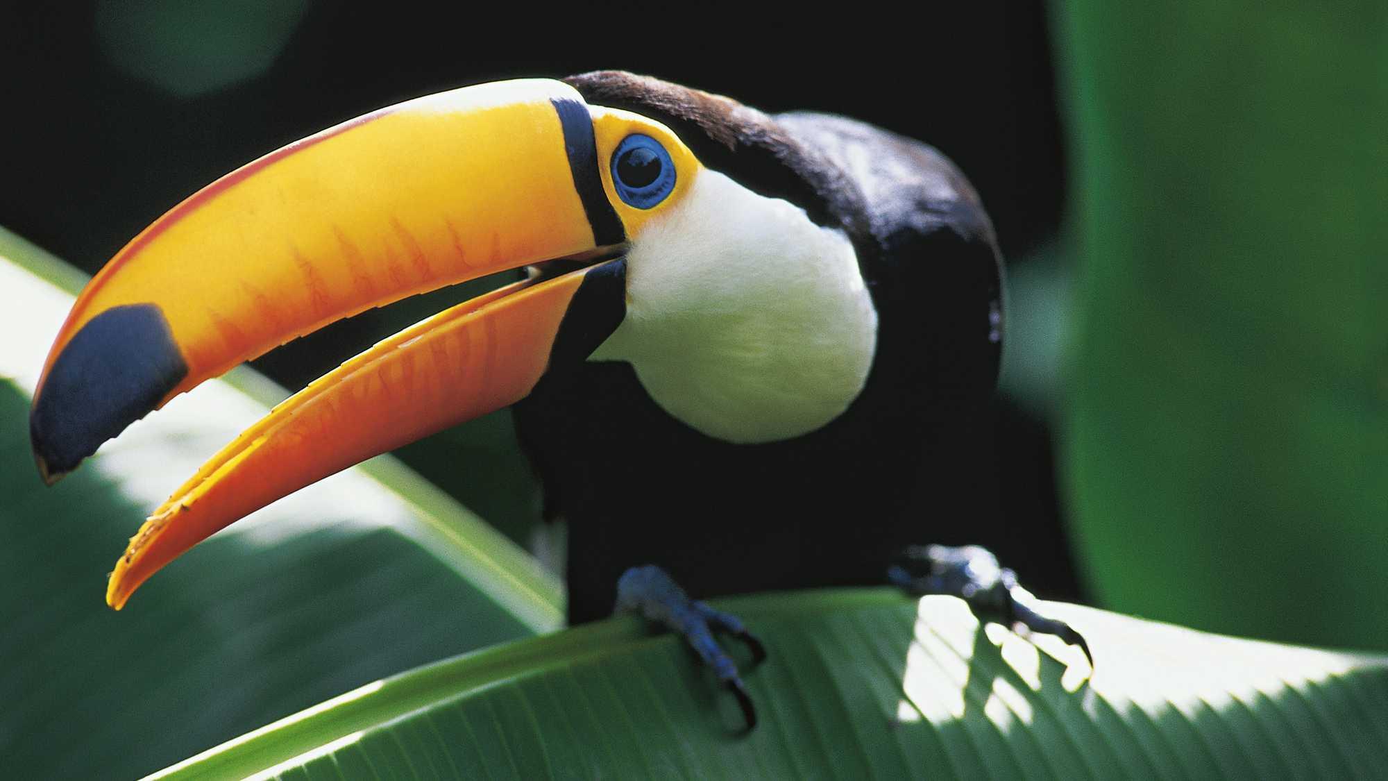 Amazonia | Events | Coral Gables Art Cinema